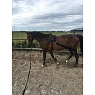 Harrys Horse Longeerband Elastisch