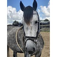 Harrys Horse Frontriem Diamond Wave Full