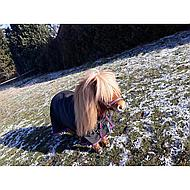 Harrys Horse Regendeken STOUT! Black 65/95
