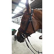 Harry's Horse Hoofdstel Lolipop Shetland