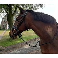 Harrys Horse Hoofdstel Brighton Zwart Pony