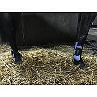 Harrys Horse Beenbeschermerset SU19  Infinity Pony