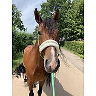 Harrys Horse Halster Lyrics IV Groen Shetland