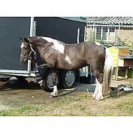 Harrys Horse Cool-legs