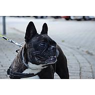 Seresto Teken en Vlooien Halsband Grote Hond vanaf 8kg 70cm