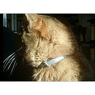Seresto Tick and Flea Collar Cat to 8kg 38cm