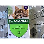 Advantage 80 Spot-On Kat 4-8kg 4pip