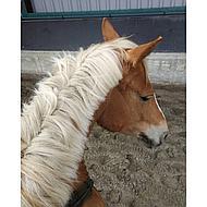 Hippostar Horse Bites Appel 1500gr