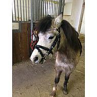 Pfiff Ponybit Zilver 10,5cm