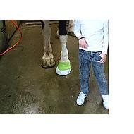 Kerbl EquiLastic selbsthaftende Bandage, Grün 10cm