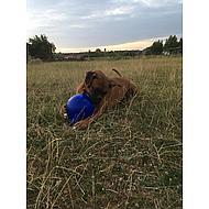 Jolly Ball 20cm Blue Horse/dog