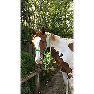 Agradi Nylonhalfter Classic Schwarz Pony