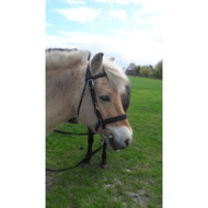 Harrys Horse Licol/Bridon Noir Poney
