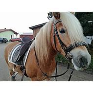 Harrys Horse Teugels Leder met Rubber Gevoerd Bruin Cob