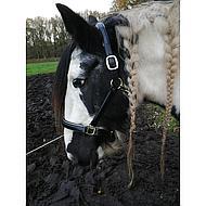 Harrys Horse Halster Leder Zwart met Goude Bies Full