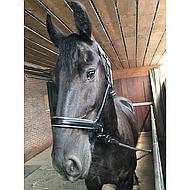 Harrys Horse Licol Cuir avec Jonc Argent Full