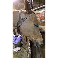 Harrys Horse Halfter Miracle Hellbraun M