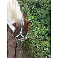 Harrys Horse Halsterlijn Soft Standaard Musketon Blauw/Rood