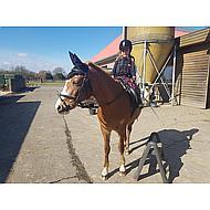 Harrys Horse Fly Veil White Full