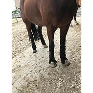 Harrys Horse Beenbeschermers Gevoerd Full