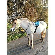 Harrys Horse Gebissvorlegescheiben Schwarz Pony