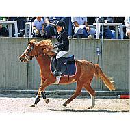 Harrys Horse Mors Pessoa 2 Anneaux supplémentaires 14.5