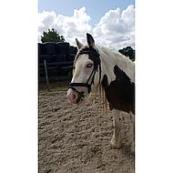 Harrys Horse Watertrens Dubbelgebroken Apple 11.5