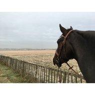BR Teugel Linnen 19mm Blind/ronde Gesp Zwart/Zilver Pony