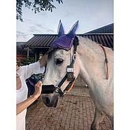 BR Oornetje Event Leaf Pony