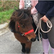 Premiere Halster Standaard Poly Zwart Pony