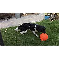 Jolly Ball Speelbal Geel 10''