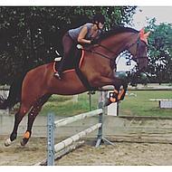 Harrys Horse Étriers Compositi Profil Premium Orange Adulte