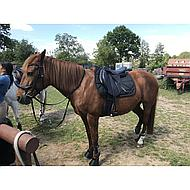 Harrys Horse Stirrups Composit Relex Reflective Black Adult
