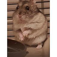Beaphar Care+ Hamster Smaakvol Premiumvoer 250gr