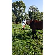 Bucas Buzz-Off Fly Mask Zebra XL
