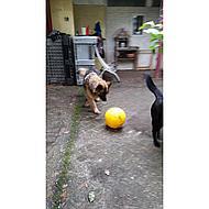 Kerbl Hundespielball aus Kunststoff Gelb 30cm