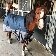 Harrys Horse Couverture d'Hiver Xtreme 200gr 1200D Marin 165/215