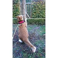 Kerbl Katzengeschirr Active mit Leine Rot 120cm