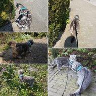 Kerbl Katzengeschirr Active mit Leine Blau 120cm