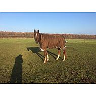 Rambo by Horseware Wug Turnout 400g Chocolate/black 140/190