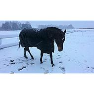Horseware Trot Plus Heavy Black Tan 155/205
