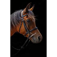 Amigo by Horseware Mio Bridle Black X Full
