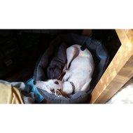Yap Rimini Hondenmand Ovaal 76x68x25cm