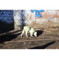 Hondenjas Teddie Reflecterend 60cm