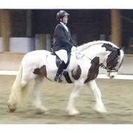 Red Horse Rijjasje Concours Streep Zwart 44