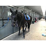 Harrys Horse Singel+ Merino Padding Cream 65cm
