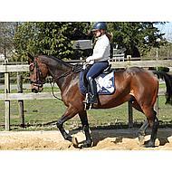 Harrys Horse Beugels Compositi Profile Zwart Adult