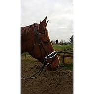 Harrys Horse Bridle Chique Black Full