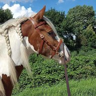 Harrys Horse Mors à Olive Gold Double Brisure O-link 11.5