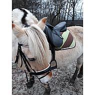 Harrys Horse Lanières de Muserolle Crystal Noir 135cm